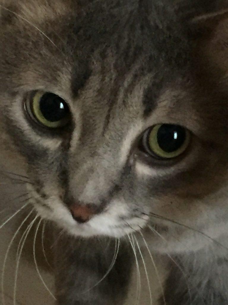 奇跡の回復力の猫ちゃん