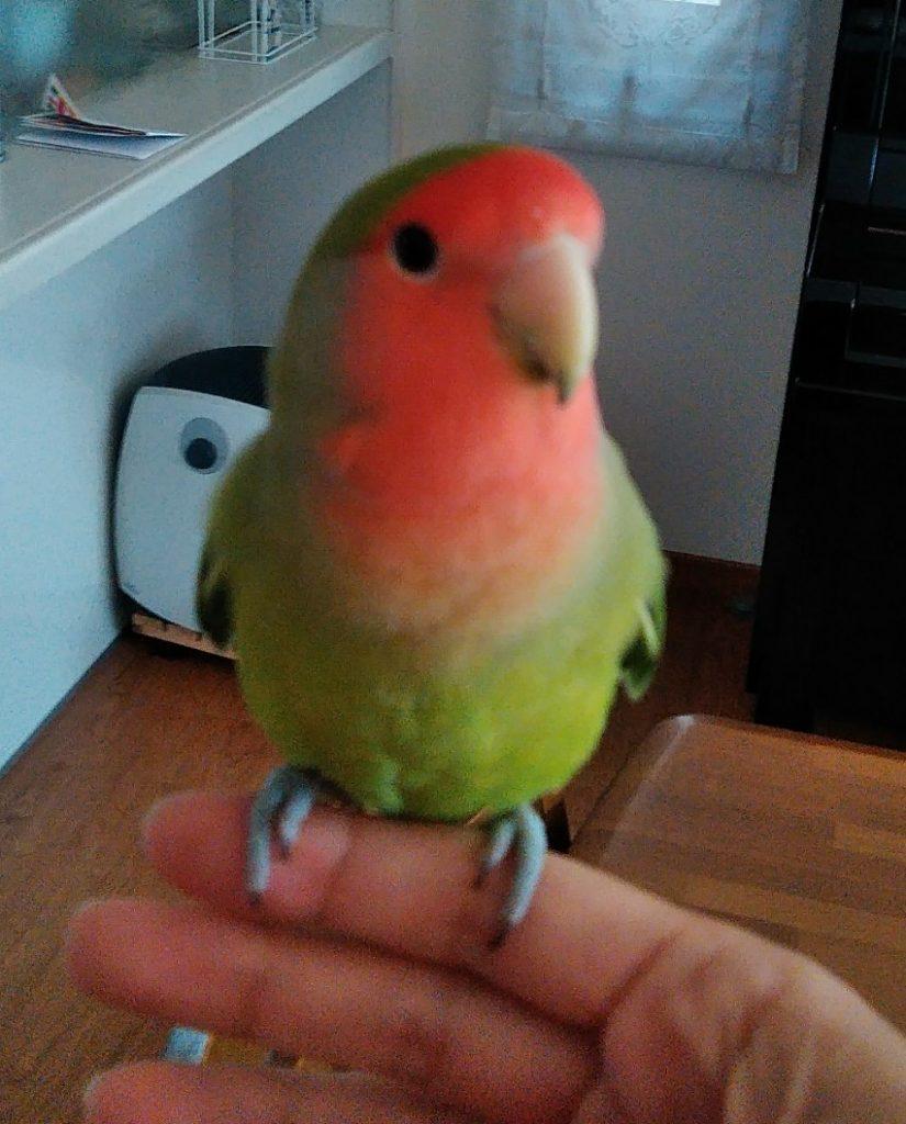 鳥のお世話もしています!