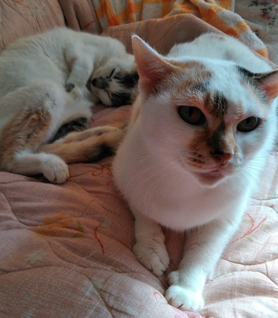 三毛猫の姉妹